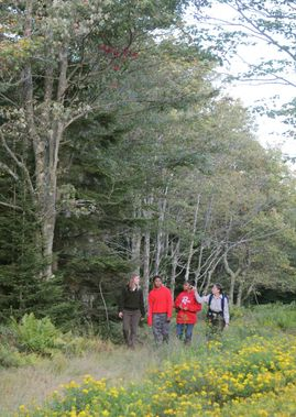 Students learn about Canaan Valley on a ranger led hike