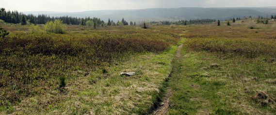 A trail on the Dolly Sods Plateau