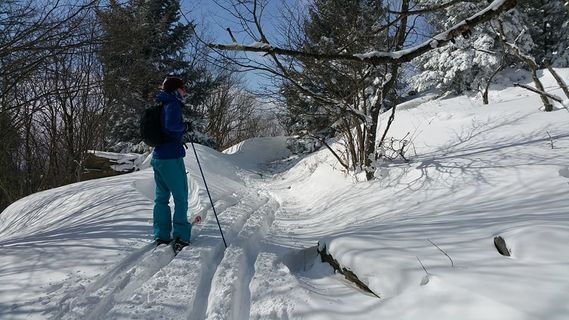 A skier moves along a snowy trail