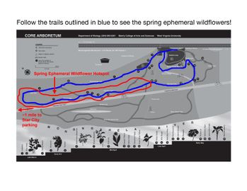 wildflower walk route with hotspot handout
