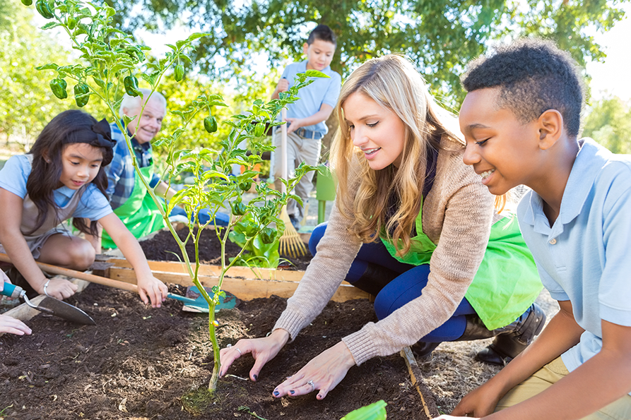 children and teacher planting in a raised garden with dark soil