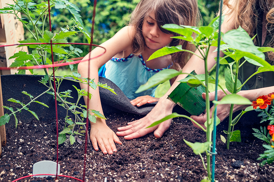 school aged girl planting in a raised container