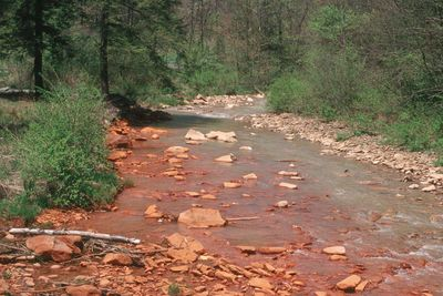 Acid mine drainage empties into muddy water.