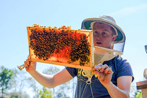 Matthew Byrd inspects his bees looking for the queen bee