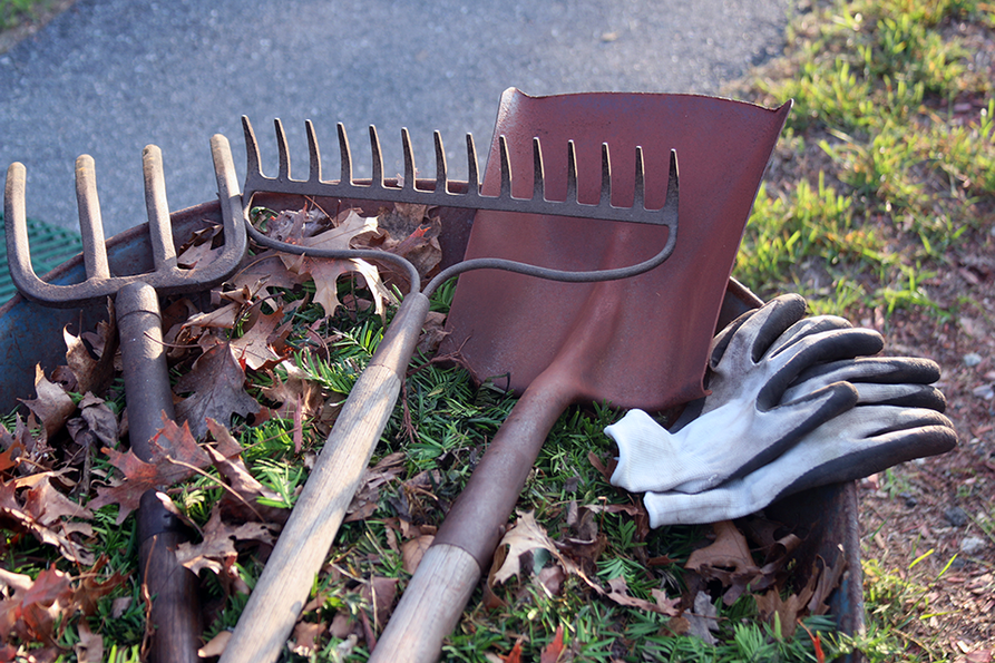 pitch fork, rack and shovel laying on a wheelburrow full of lawn debris