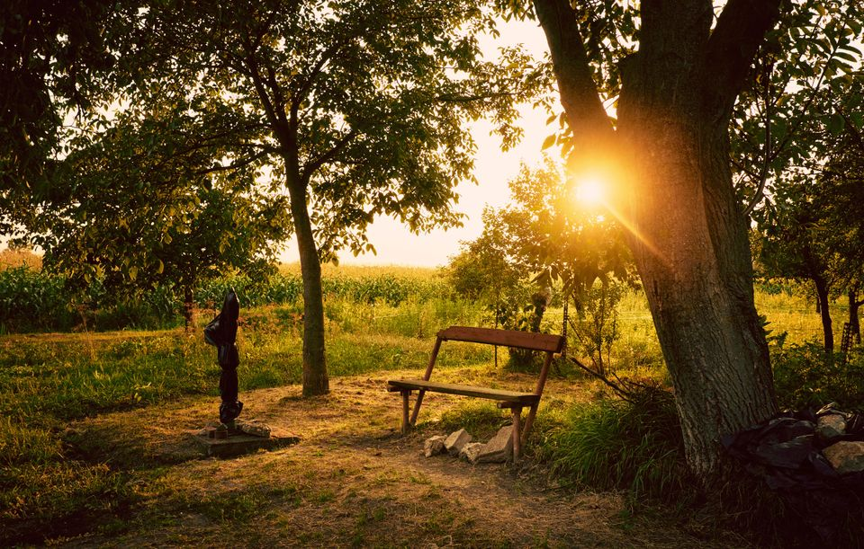 An image of a summer sunrise over a garden with a bench under a tree.