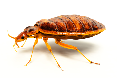Insect Pest Management | Extension Service | West Virginia