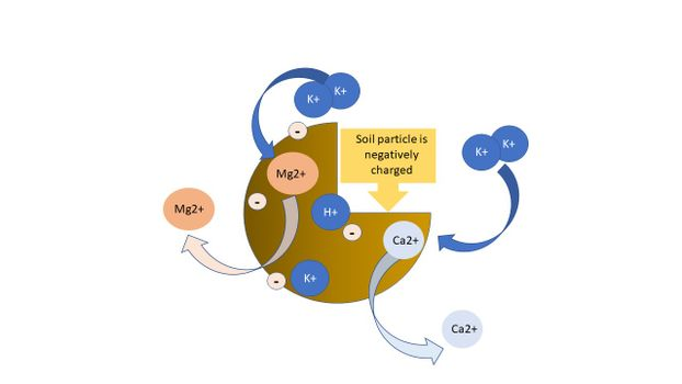 Graphic representations of cation exchange on soil particles