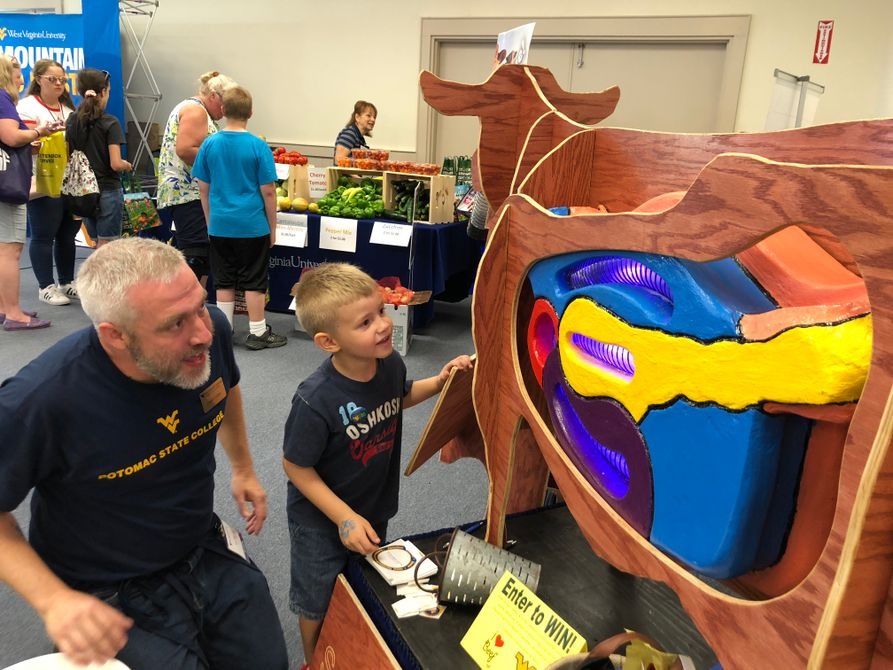 Young boy feeds vacuum cow diorama with help of WVU rep in the WVU Building at the State Fair