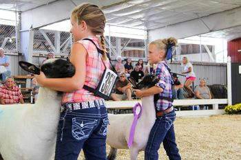 State Fair 4-H Livestock Competition - young firls showing their sheep