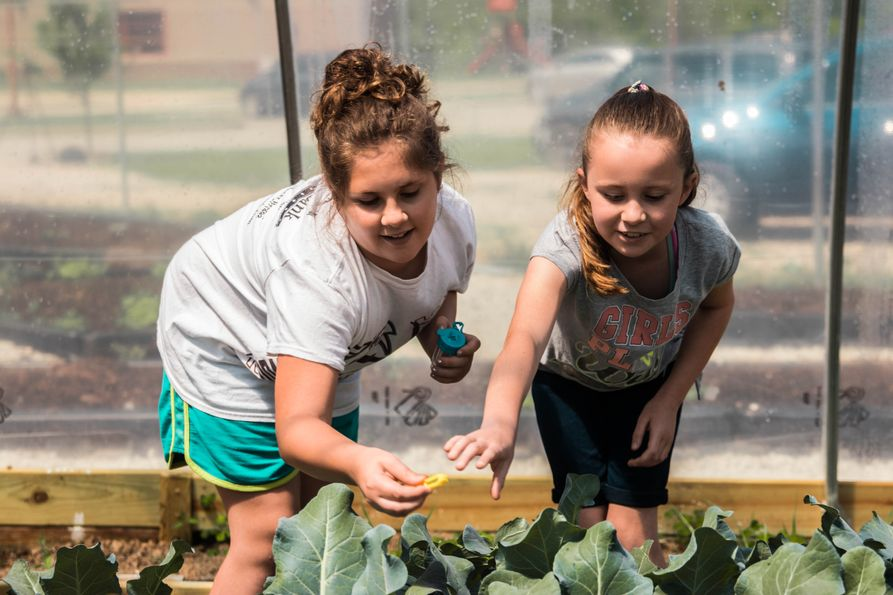 Two elementary students looking at green vegetables in a high tunnel