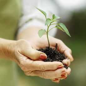 photo of hands holding seedling