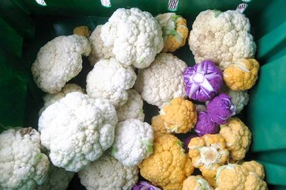various heads of cauliflower in white, yellow and purple in a green bin