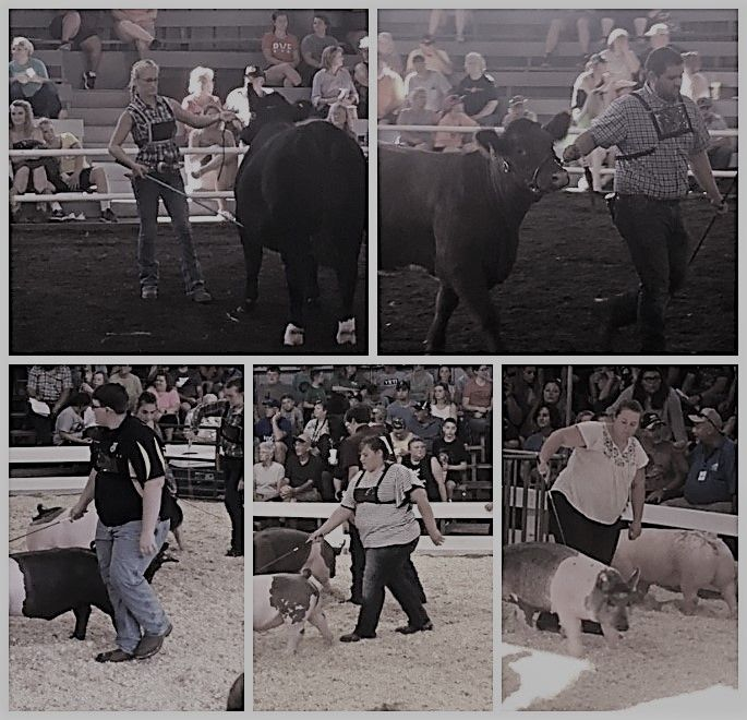 4-H livestock show collage featuring ten Wood County winners.