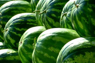 Watermelons up close.