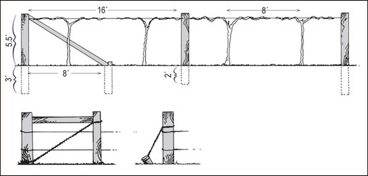 Construction details of a one-wire trellis and alternative methods of bracing end posts