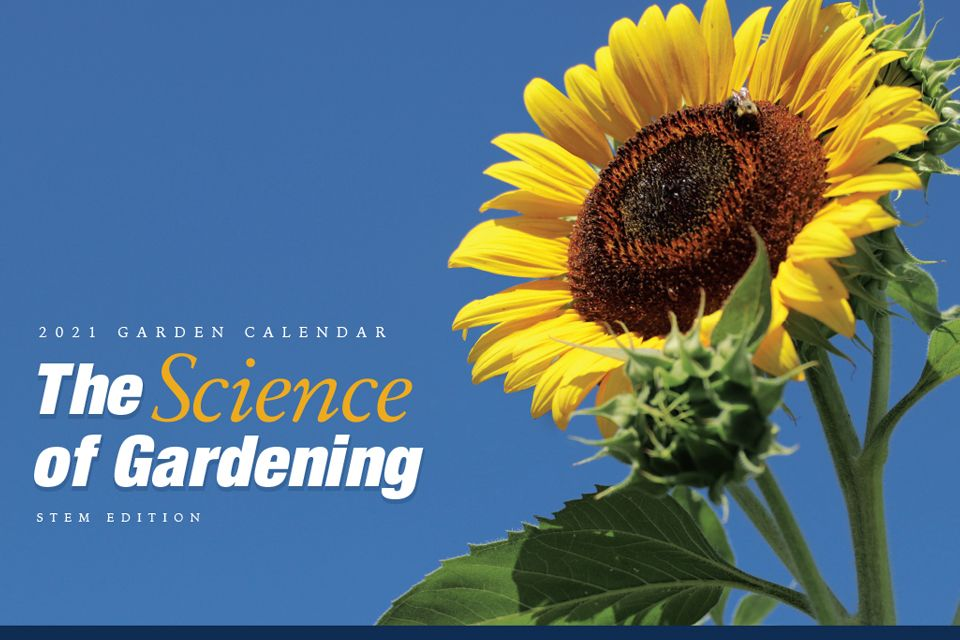 Rooted in Our Heritage: 2020 WVU Extension Service Garden Calendar (featuring an image of a woman's hands snapping beans).