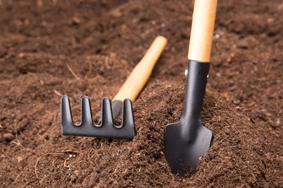 A rake and a shovel in a mound of dirt.