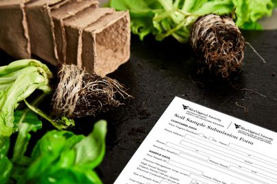 A copy of WVU's Soil Test Form sits on the ground amid plants and containers.