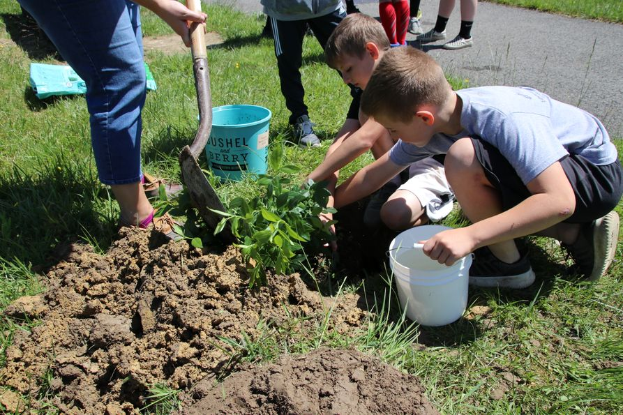 Male students at a Randolph County elementary school help plant a blueberry bush