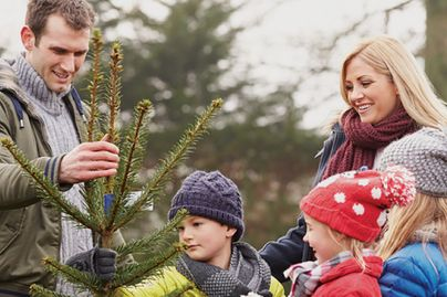 A man and woman with three children select a Christmas tree.