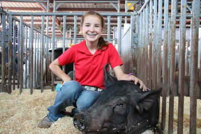 4-H member with a hog in a pen