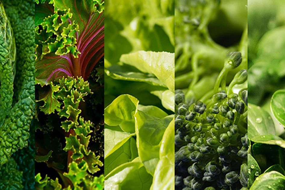 Photograph of several types of leafy greens.