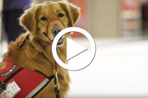 wvu today service dog story october 2019