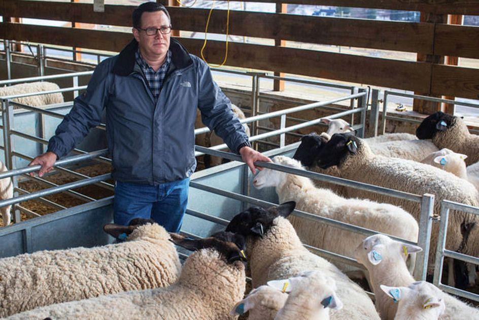 Scott Bowdridge with sheep.