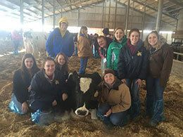 Students with dairy cow