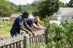two students removing damaged fence