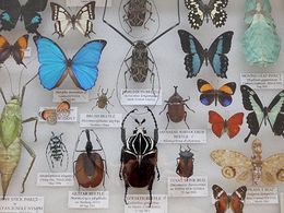 Display board of various labeled insects