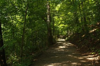 One of the foot trails in the WVU Core Arboretum