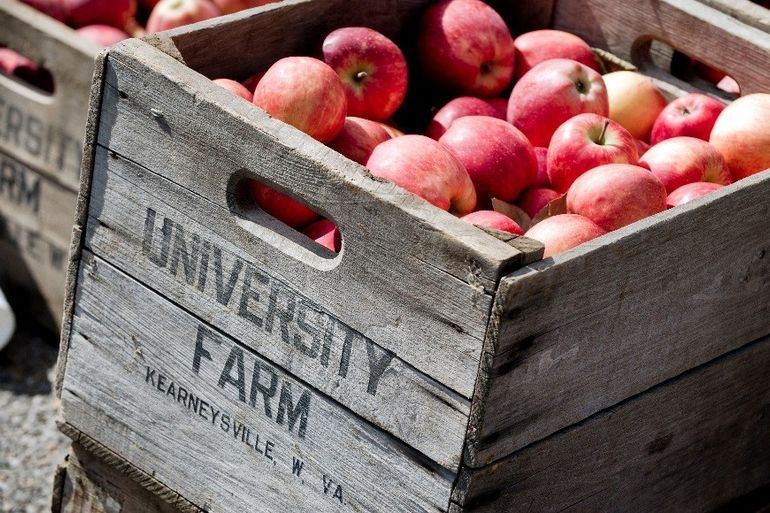 Apples, brought in from Kearneysville, W.Va., will be on sale at the WVU Organic (Horticulture) Farm