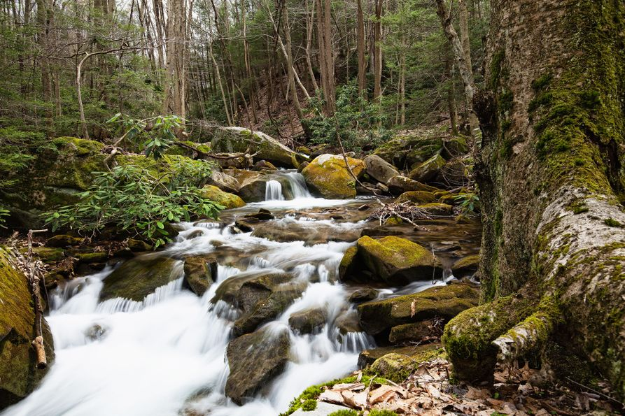 A picture of a river rambling down rocks in Cooper's Rock State Forest