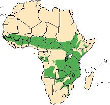 map of Africa showing waterbucks live in a band across central Africa and also along the southern eastern part of the continent