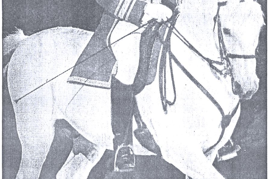 Photo of one of the Royal Lipizzaner Stallions that appeared in the Dominion Post in 1975