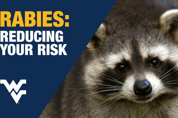 Rabies Risk graphic with photo of raccoon