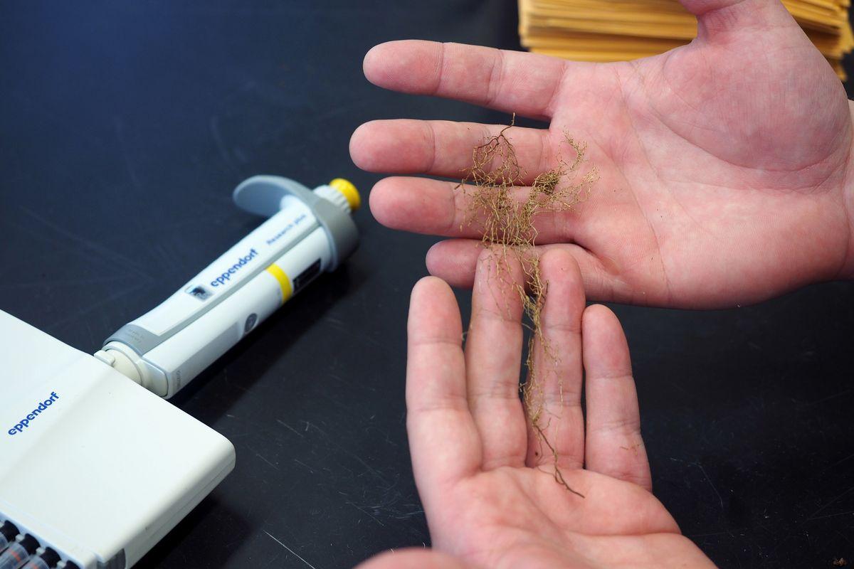 forest nitrogen