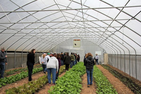 women look at greens growing in a hoop house