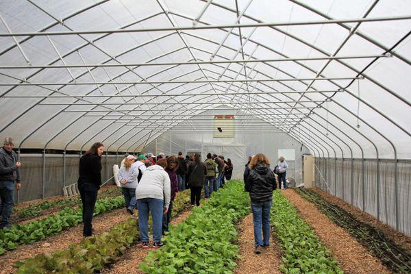 women look at greens growing in a hoop house