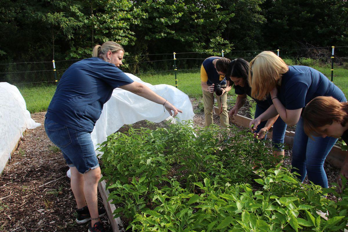 Women work in a garden