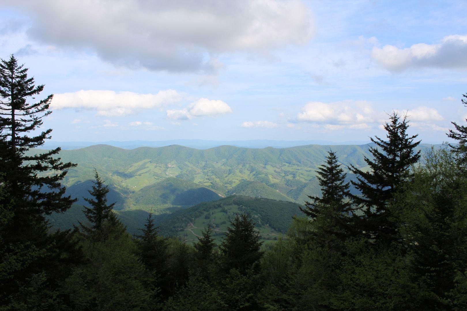 view of mountains through evergreen trees