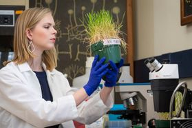 Young woman in a lab coat looks at grass growing in a pot