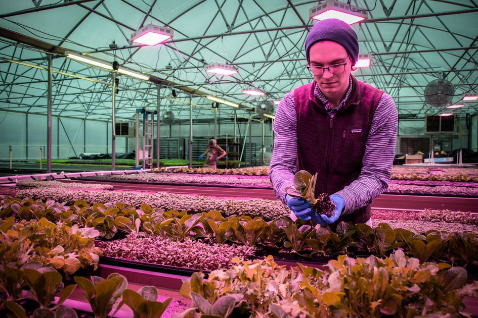 Man tends to plants in a greenhouse.