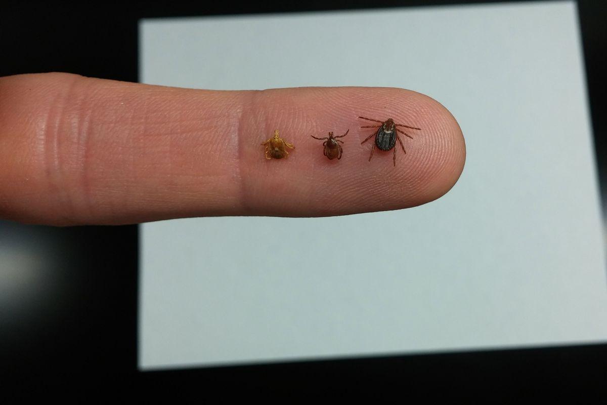 An array of ticks on a finger.