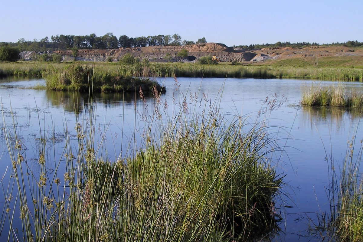 Wetlands with a mine site in the background