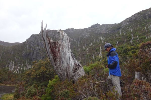 woman stands by dead tree stump amid dozens of dead tree stumps on a mountain