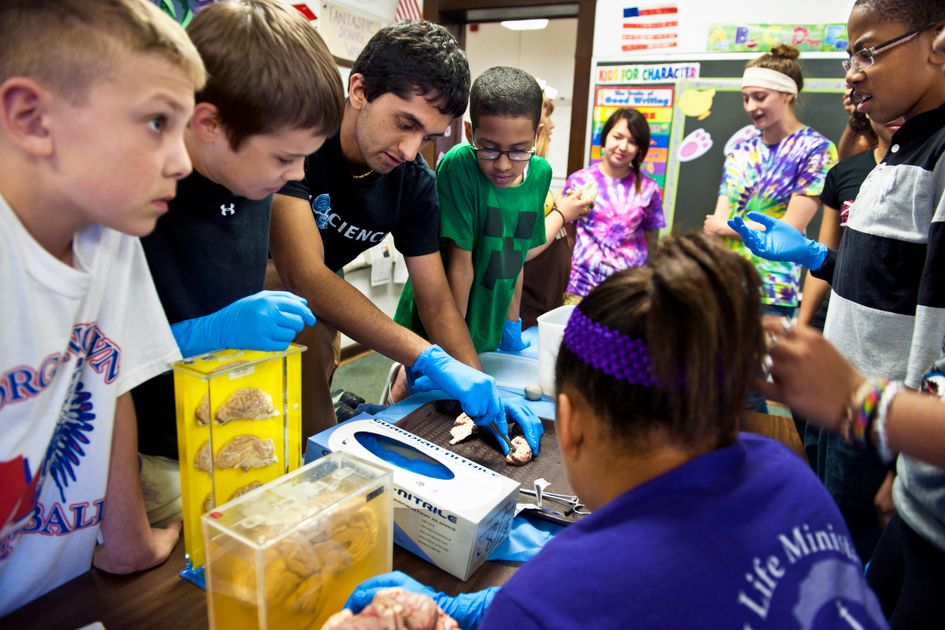 Children participate in the WVUteach program by watching a simulated brain dissection