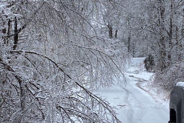 Trees covered in snow and ice